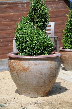 tuscan-sun-planters-collection